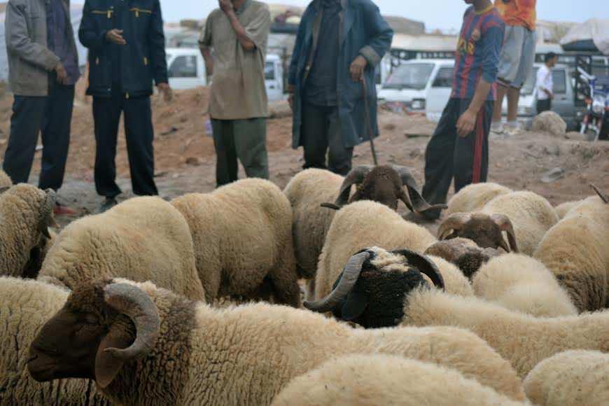 Eid al Adha in Morocco