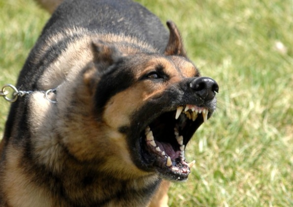 Morocco's Government Council to List Banned Dog Breeds