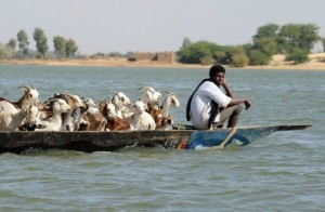 A goat herder in Timbuktu transports his goats on February 4, 2013 in a pirogue on the Niger River.