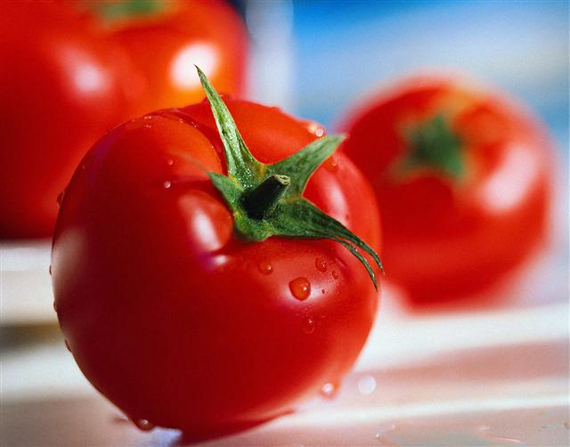 "The European Commission (EC) has laid to rest Clara Aguilera's claims that Morocco's tomato exports as a threat to ""the stability of the EU tomato market."""