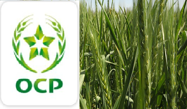 OCP and food security