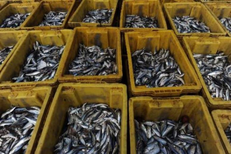 Morocco Hails Adoption by EP of New Fisheries Agreement
