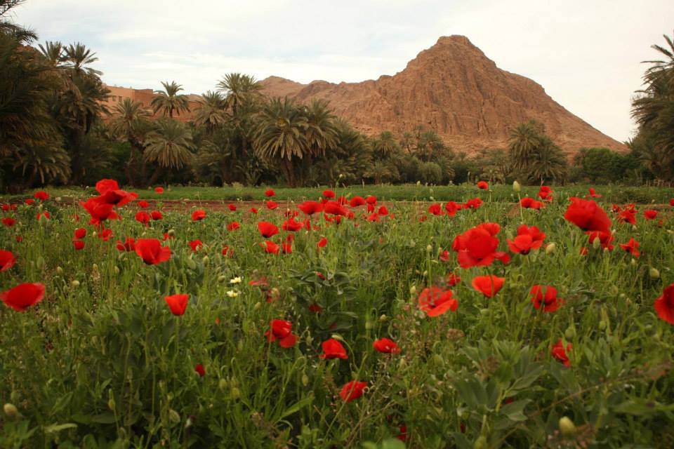 The Rose Valey near Boulmene Dades