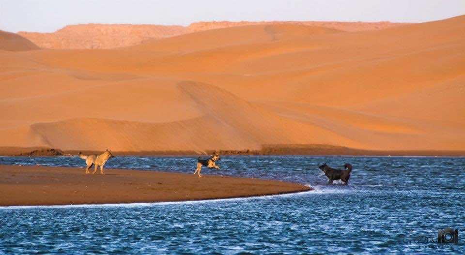 Beautiful Dune near Dakhla, Morocco