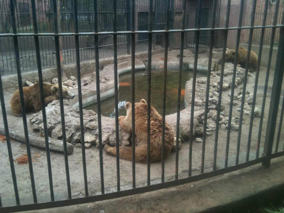 The plight of neglected animals at Casablanca's Ain Sbaa Zoo
