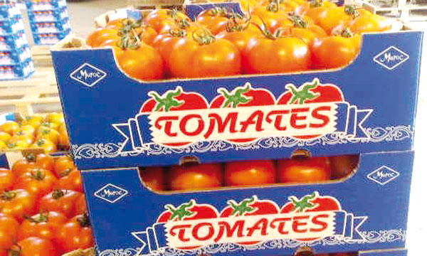 Moroccan tomatoes exported to the EU (Photo courtesy Lematin.ma)