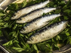 Morocco the World Leader in Sardines Production
