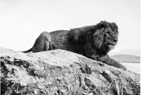 5 Animals That Once Roamed Morocco but No Longer Exist