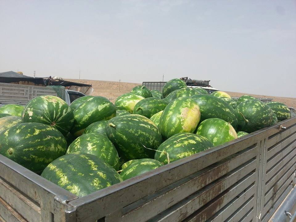 tracks loading red watermelon, to all Moroccan markets.