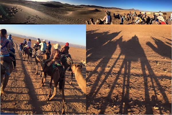 A Night in the Sahara: Camels, Cars and Shooting Stars