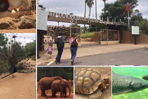 Rabat Zoo. A Wild Encounter in Rabat