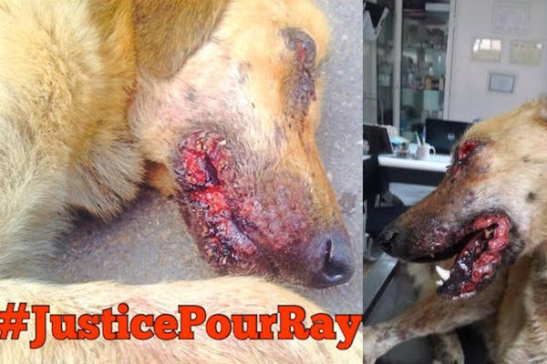 #Justice for Ray
