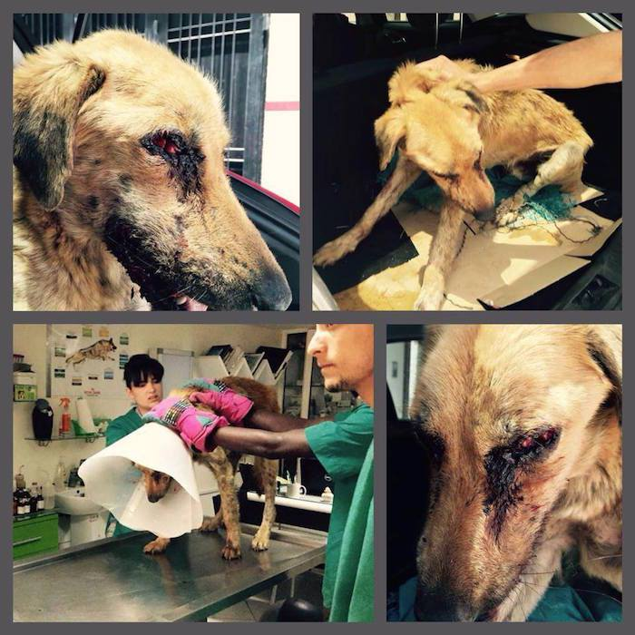 Ray, Plight of an Abused Dog