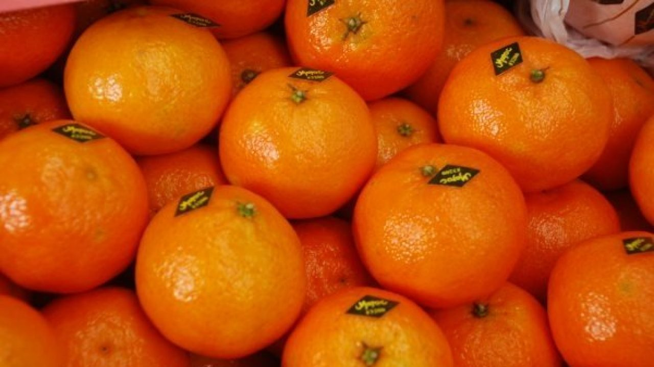 Moroccan Orange Exports to Middle East Increase by 4,102%