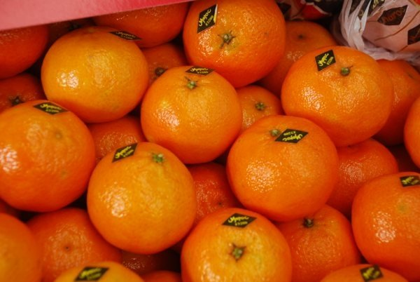 Moroccan Orange Exports to Middle East Increase by 4102%