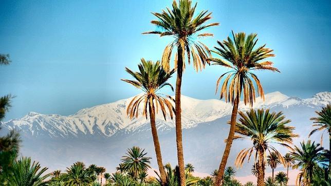 Palm tree, Skoura in Ouarzazate