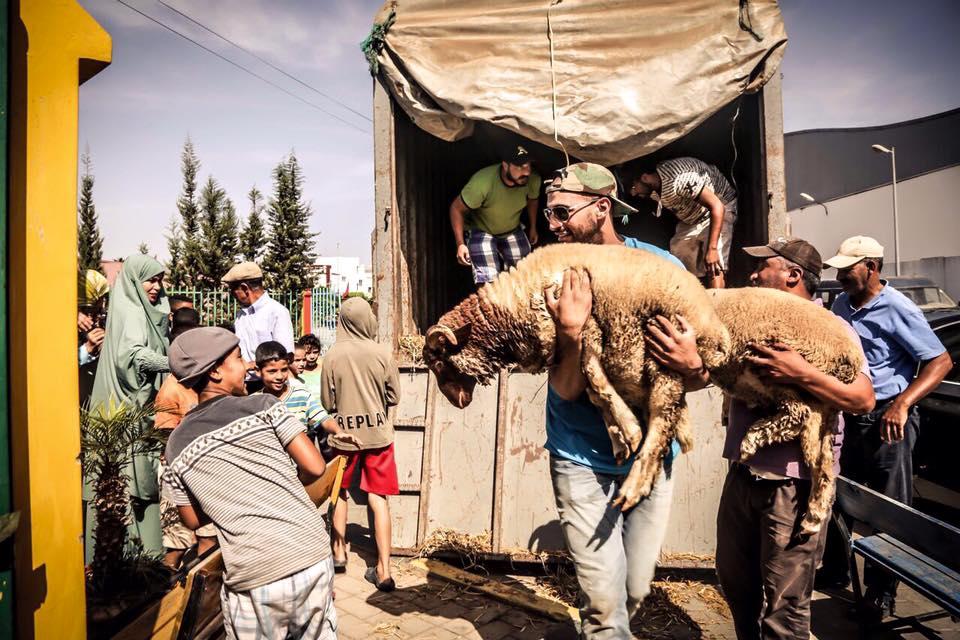 Moroccan Champion Badr Hari Distributes Lambs to Poor Families, Shares Their Joy