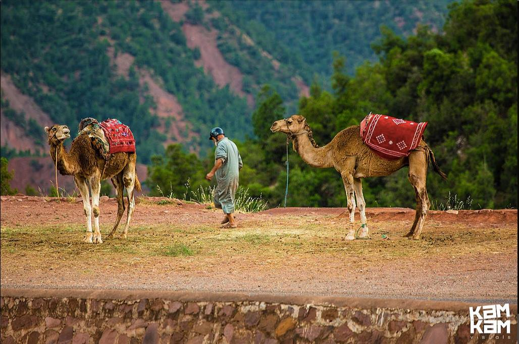 Enjoy Morocco