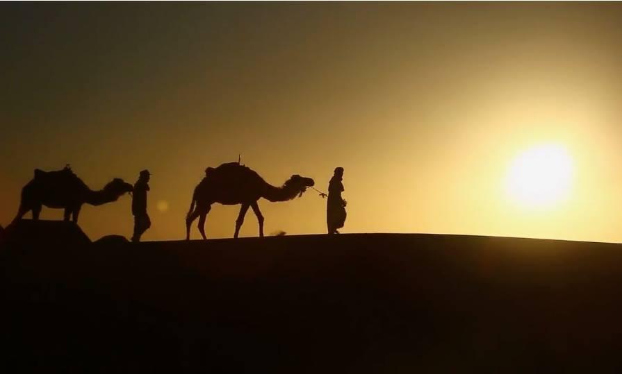 camels trekking across vast deserts