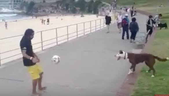 Video: Dog Plays Soccer With Owner at the Beach