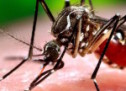 WHO Warns Morocco of Possibility of Zika Virus Spread