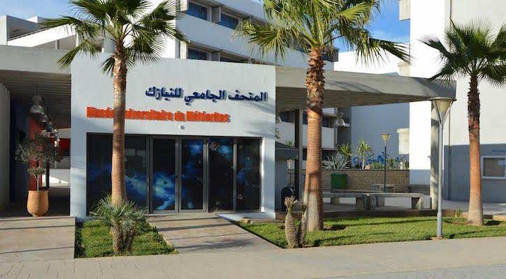 First Moroccan Museum of Meteorites Opens in Agadir