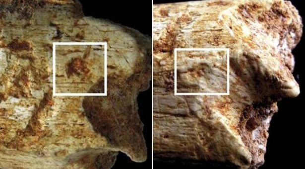 Researchers: 500,000 Year-old Casablanca Caveman Eaten by Hyenas