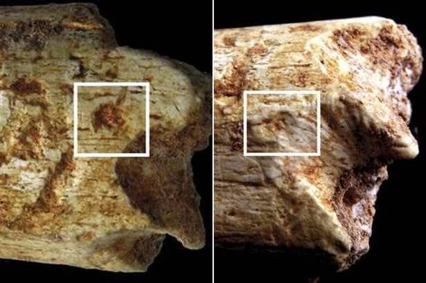 500,000 Year-old Casablanca Caveman Eaten by Hyenas