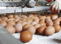 Spanish Eggs on Moroccan Plates This Ramadan