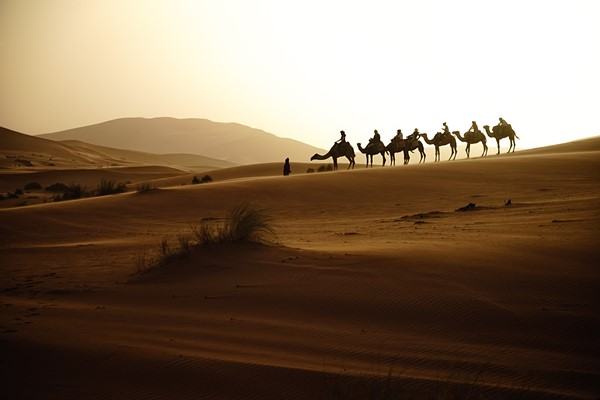 Camel excursion in Moroccan desert