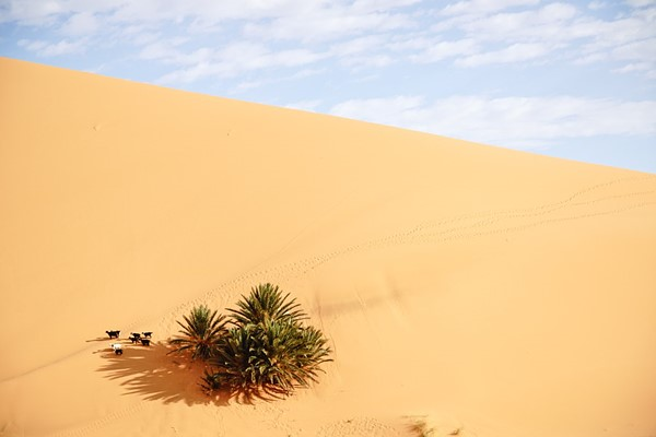 the biggest Moroccan dune in Merzouga