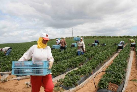 agriculture in Morocco. Economy