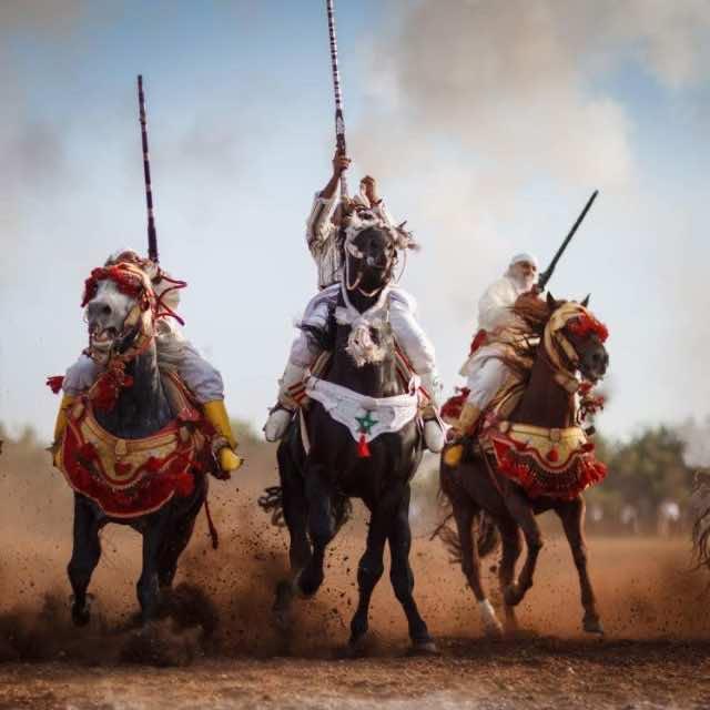 Tbourida Rider Shot Dead During Festival in Settat