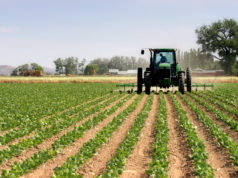 Agriculture Drives Moroccan Economic Growth
