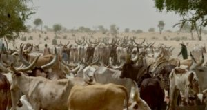 At-least-18-people-have-been-killed-in-clashes-in-Niger-between-cattle-herders-and-farmers.