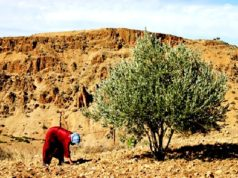 New Technologies Improve Olive Production, Keep Moroccan Youth in Rural Areas