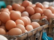 Morocco to Import Eggs From Ukraine