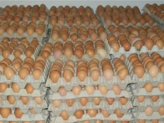 Moroccan Egg Consumption Drops, but Industry Remains Strong