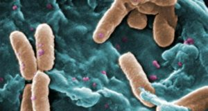 WHO Names 12 Bacteria Posing Greatest Threat to Human Health