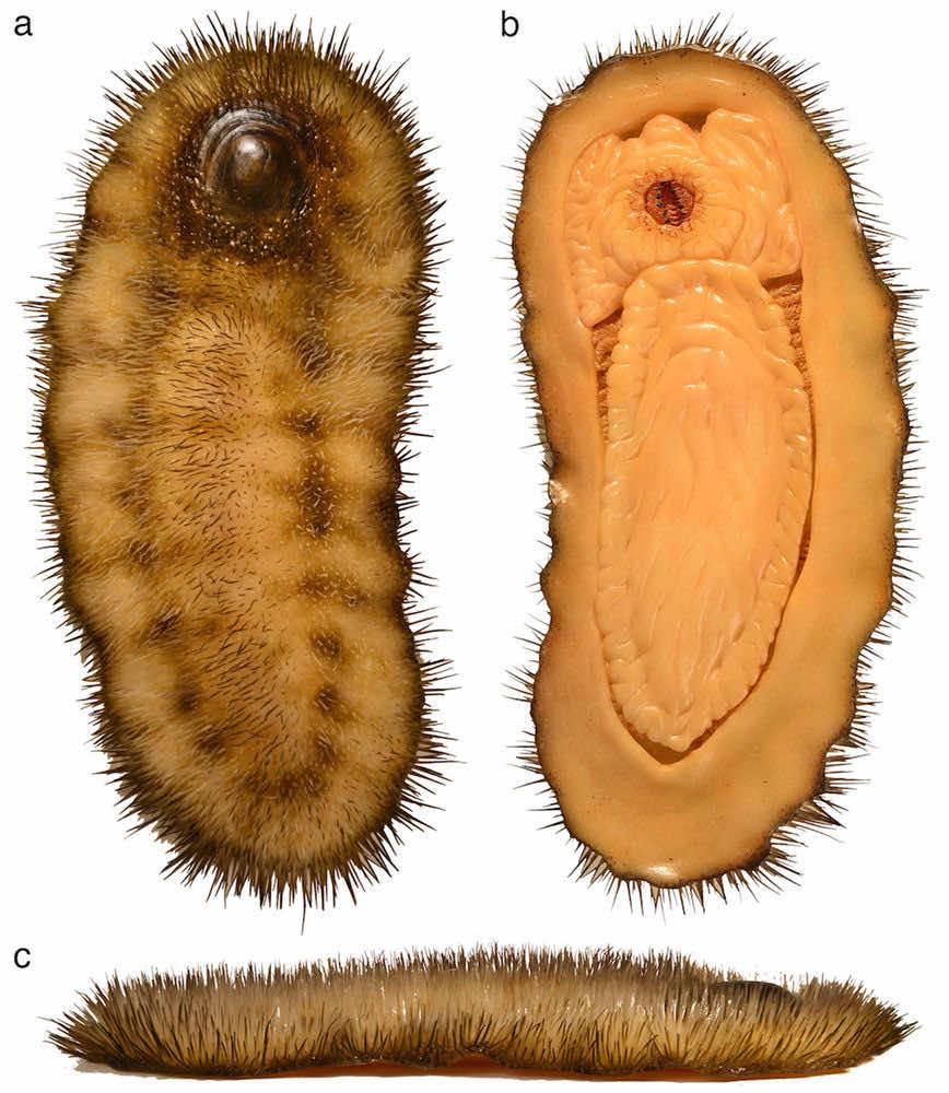 ancient mollusk