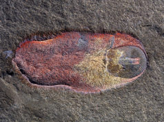 holotype spiny slug