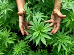 Lebanon Looking to Legalize Cannabis in Hope of Restoring Economy