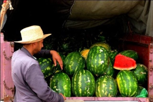Moroccan Health Office 'No Watermelon Fertilized by Human Waste'