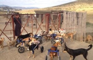 British-Moroccan Woman Helps Stray Animals in Tangier