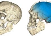 Discovery Homo Sapien is Moroccan, Precisely from Marrakech