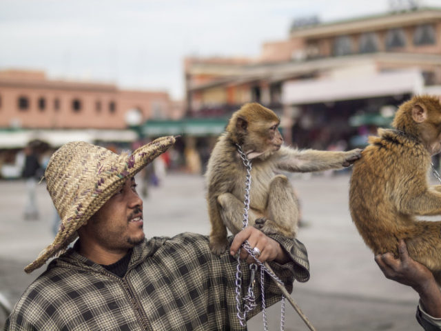 Monkey Attacks Tourist in Jamaa El Fna Square