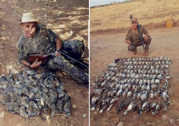 Photo of Bird 'Massacre' Sparks Outrage in Morocco, Chaabi Singer Denies Involvement