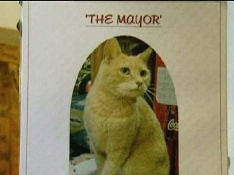 """Alaska Town Mourns Loss of Cat Mayor """"Stubbs"""""""