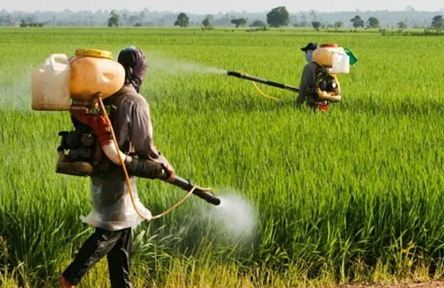 Three Banned Pesticides are Being Sold in Morocco: ONSSA