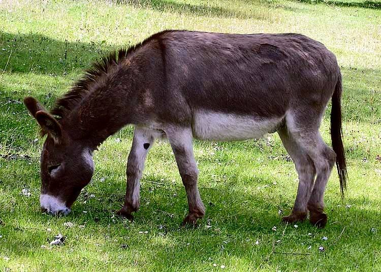 15 Teenagers Allegedly Treated for Rabies After Engaging in Bestiality with Donkey | Morocco World News